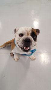 The Pet Doctor Doggie Daycare & Boarding