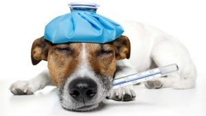 Canine Influenza and the Bivalent Vaccine