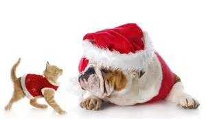 Pets as Christmas Gifts