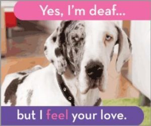 Deaf Dog Awareness Week
