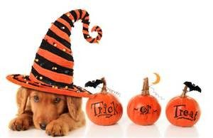Halloween Treat Reminders for Pets
