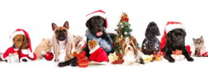 Holiday Food & Pets