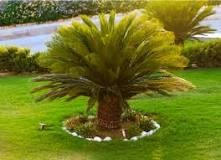 Sago Palm Toxicity with Pets