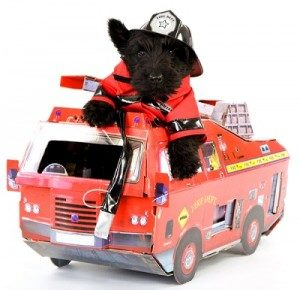 Fire Safety and Your Pet