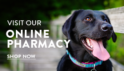 Online Pharmacy: Shop Now