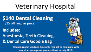 July Vet Hospital – $140 Dental Special